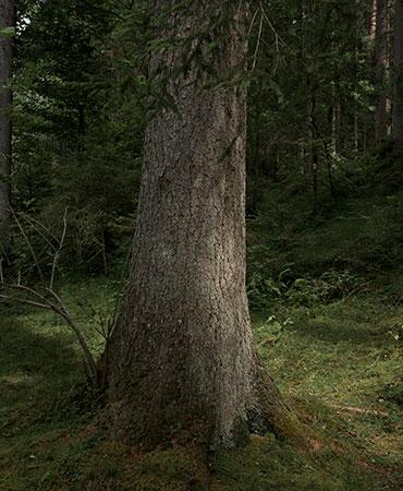 Waldbaden-3898